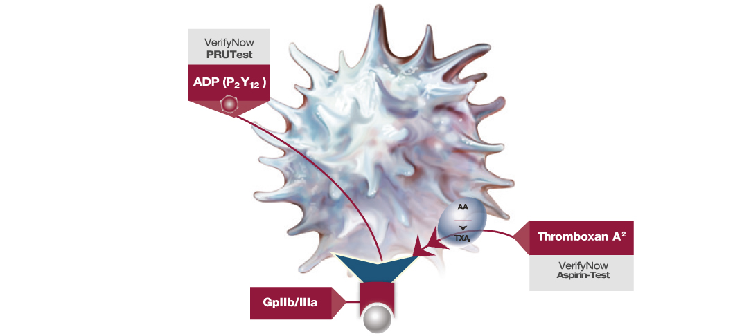 VerifyNow Activated Platelet